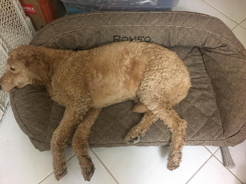 memory foam bolster dog bed / orvis memory foam bolster -- orvis
