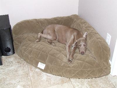 luxury corner dog bed / deep dish corner dog bed -- orvis uk