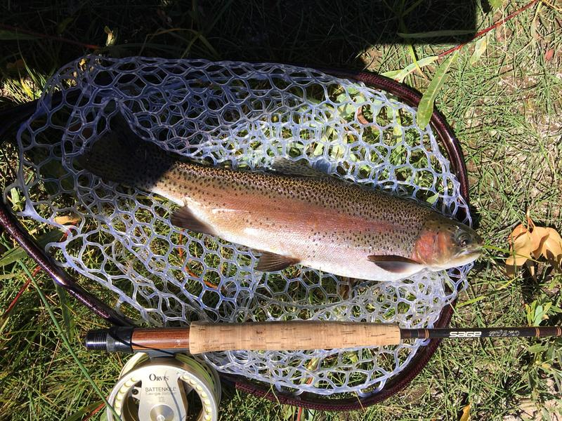 fly-fishing outfitter in colorado / fly fishing outfitters, co, Fly Fishing Bait