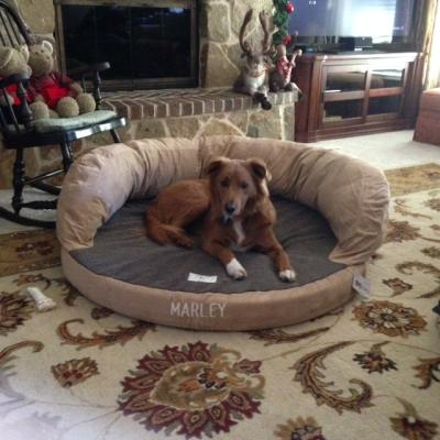 therapeutic bolster dog bed / bolster dog bed with memory foam