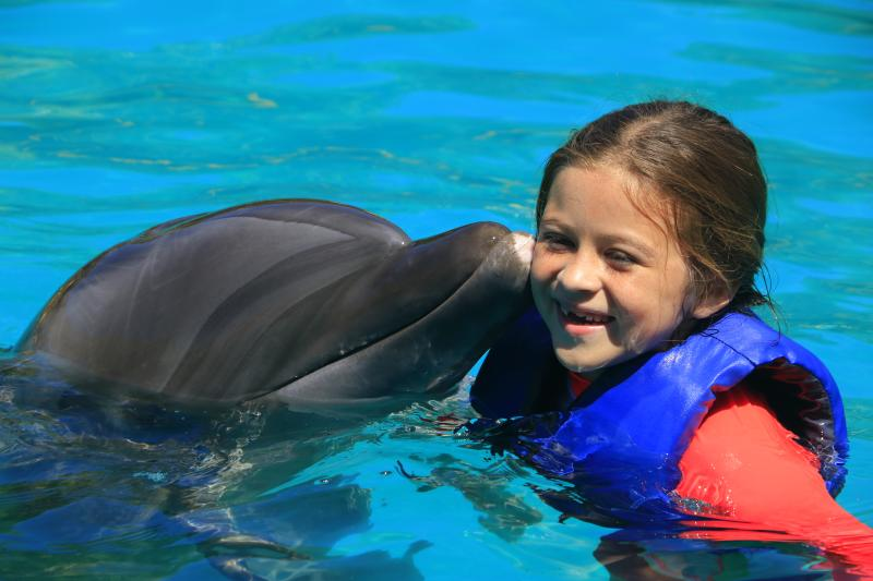 Exclusive Dolphin Swim Vip Behind The Scenes Pvr Shore Excursions Carnival Cruise Line