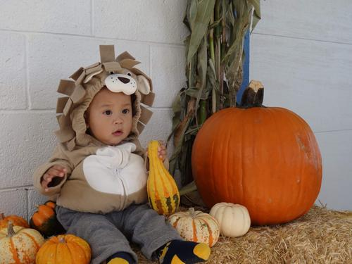752944ec8 Little Lion Halloween Costume | Carters.com