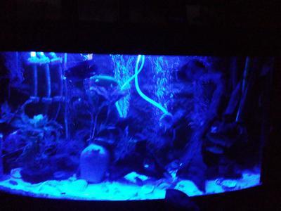 Awesome Aquarium Led Verlichting Zelf Maken Contemporary - Trend ...