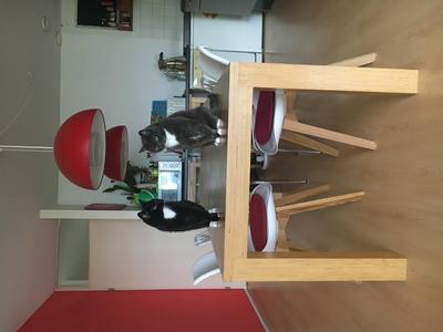 Bol.com butik living consilium valido stoel chocolade set van 2