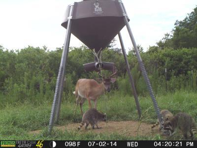 id home feeder boss buck sale blinds feeders photos added facebook new bossbuckfeeders media for