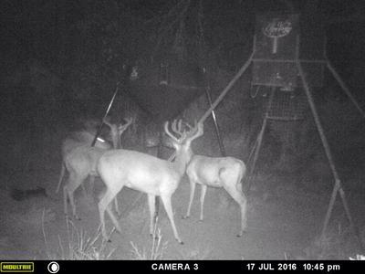 Boss Buck Gravity/Protein Deer Feeder