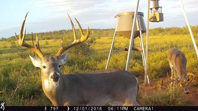 Boss Buck 12V Automatic Deer Feeder - 1200 lb  Capacity