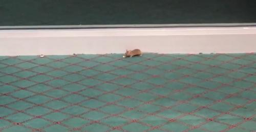 Mouse in pro shop