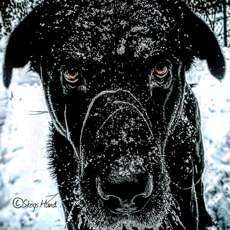 Abominable Snow Lab