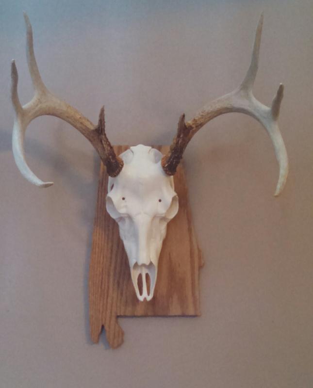 NEW Medium Antler Mounting K MMRSMM Mountain Mike/'s Reproductions Skull Master
