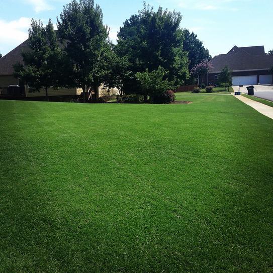 Vigoro Super Green 5,000 sq  ft  Lawn Fertilizer 62200-1 at