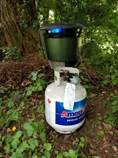 Mosquito Trap In Action!