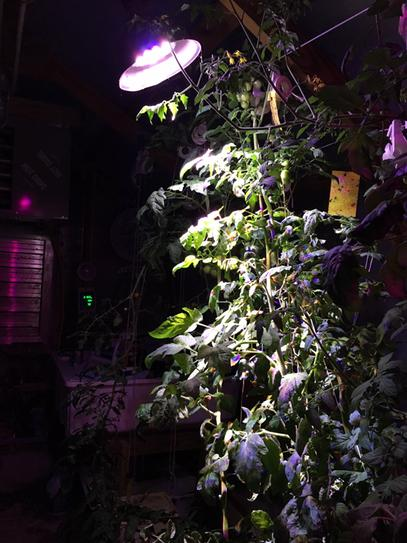 Powerful Grow Light