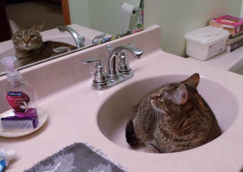 Even my cat's impressed! ;)