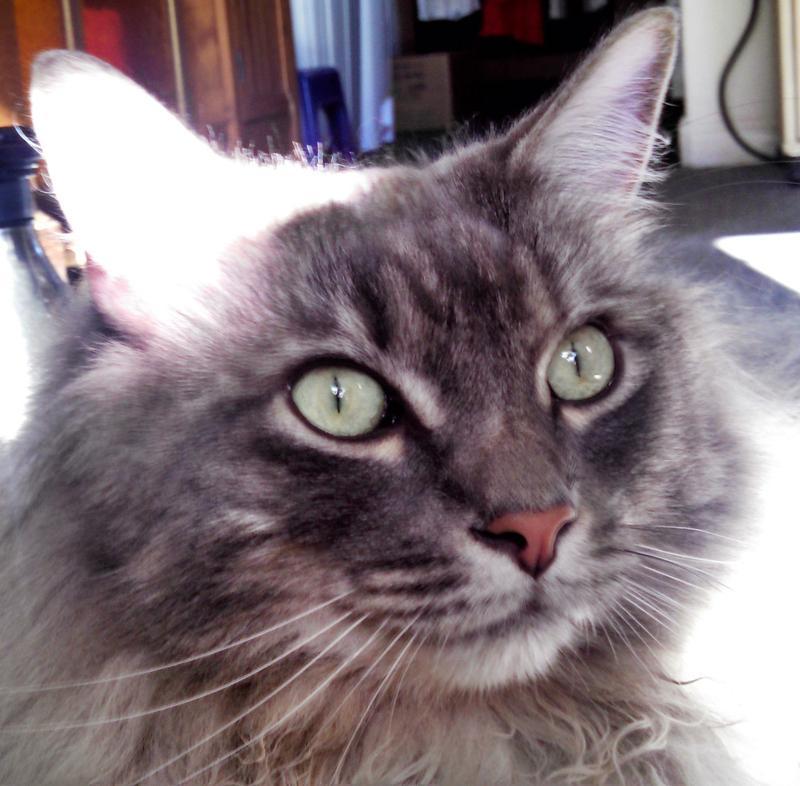 Fine Long Hair Clumping Wood Cat Litter Download Free Architecture Designs Itiscsunscenecom