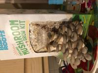 Back to the Roots Organic Mushroom Grow Kit Pearl Oyster
