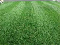 Milorganite Slow Release 36-lb 2,500-sq ft 6-4-0 Lawn