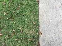 BLACK+DECKER Grass Hog Replacement Spool at Lowes com