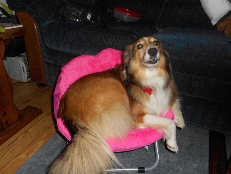 foldable furry pet bed