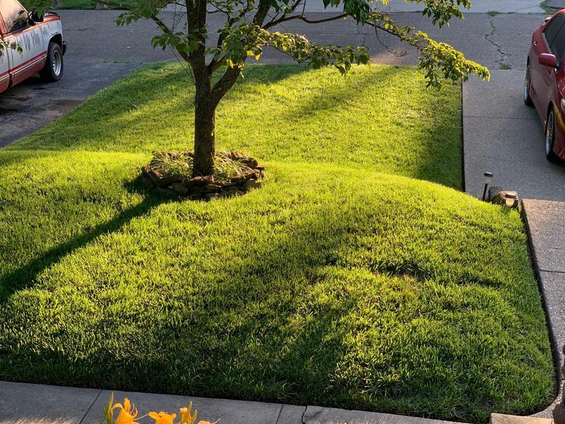 Scotts Step 2 Weed Control Plus Lawn Fertilizer Lawn Care Scotts