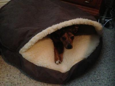 review photo 1 - Cozy Cave Dog Bed