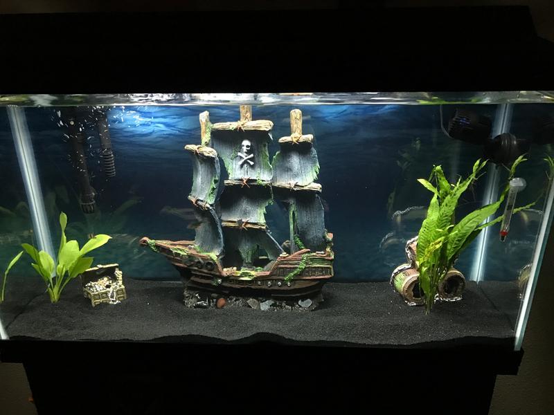 Aquarium black sand 1000 aquarium ideas for Sand for fish tank