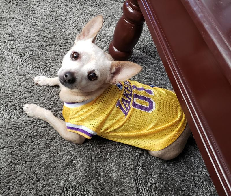 Pets First Los Angeles Lakers NBA Mesh Jersey for Dogs, X-Small ...