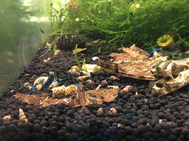 8.8 POUND Volcanic Soil Pack Pet Supplies Aquatic Plant Accessory Aquarium NEW