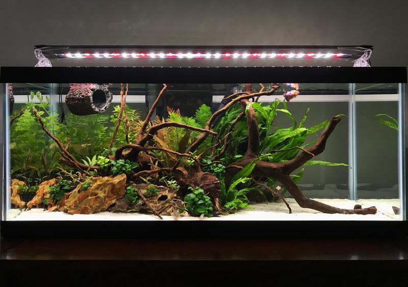 Gl Aquarium Tank 20 Gallon Long