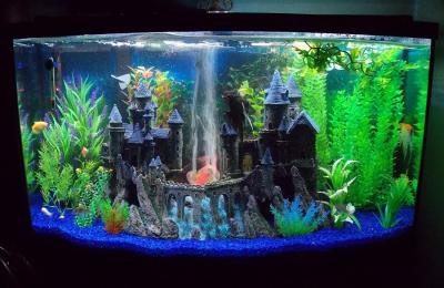 Harry potter aquarium decorations 1000 aquarium ideas for Harry potter fish tank