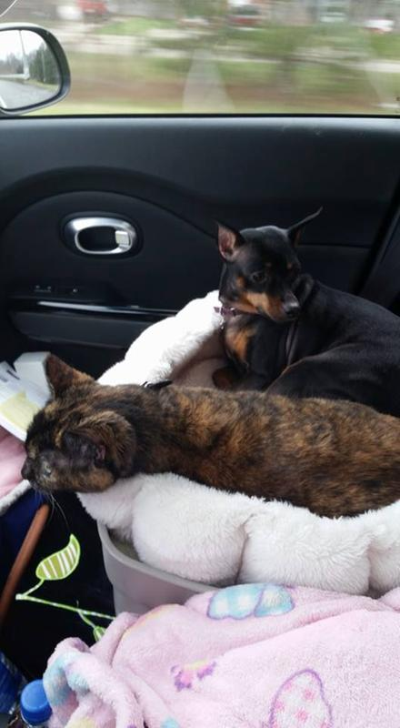 Traveling Across The Country With My Babies Montana Nadine Dog And Cheyenne Marie