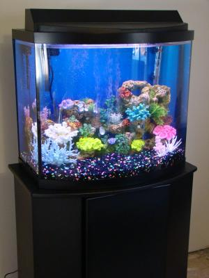 26 Gallon Bow Front Aquarium 1000 Aquarium Ideas