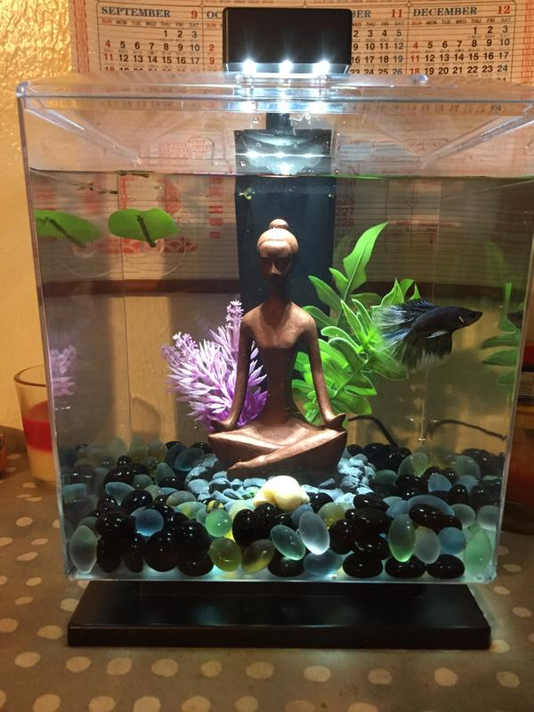 Full Size Of Fish Tank Beautiful Turtle Tankes Picture Inspirations For Turteslarge Accessories Making