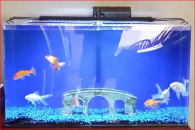 20 gallon aquarium stand petco 20 gallon laguna aquarium for Fish tank and stand combo