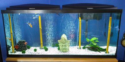 55 gallon aquarium top 1000 aquarium ideas for 50 gallon fish tank starter kit