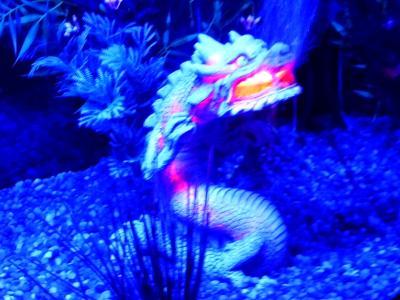Top Fin Balinese Dragon Airstone Aquarium Ornament Fish Ornaments Petsmart