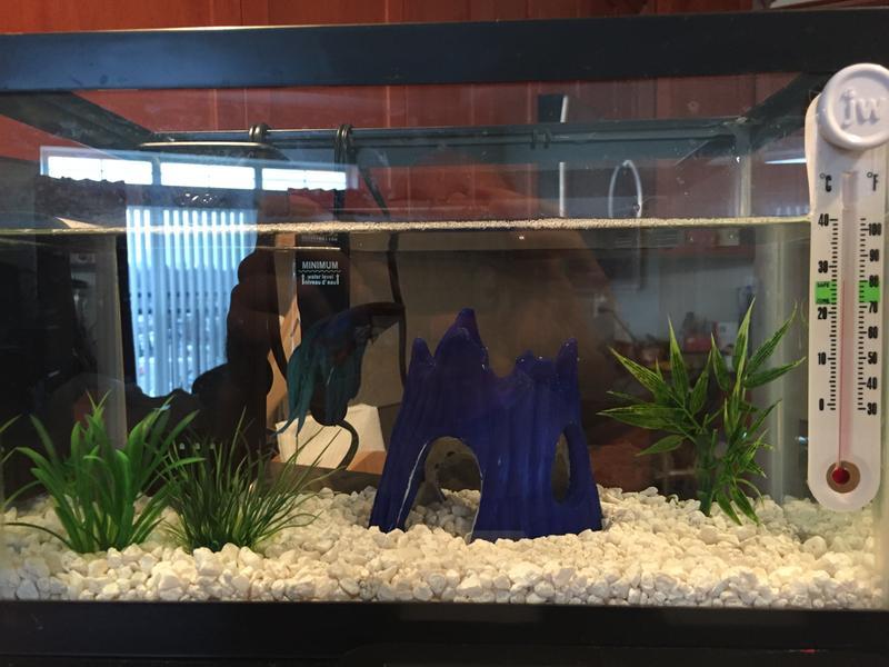 fish tunnel aquarium decor beta  cave