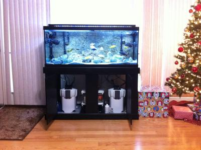 Marineland 60 Gallon Heartland Aquarium Ensemble Best Accent