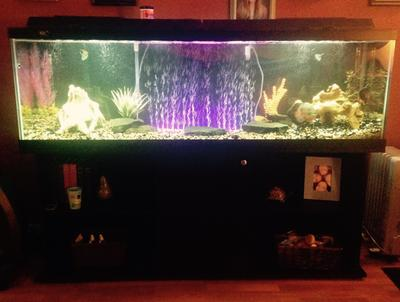 Top fin 125 gallon aquarium 1000 aquarium ideas for 125 gallon fish tank