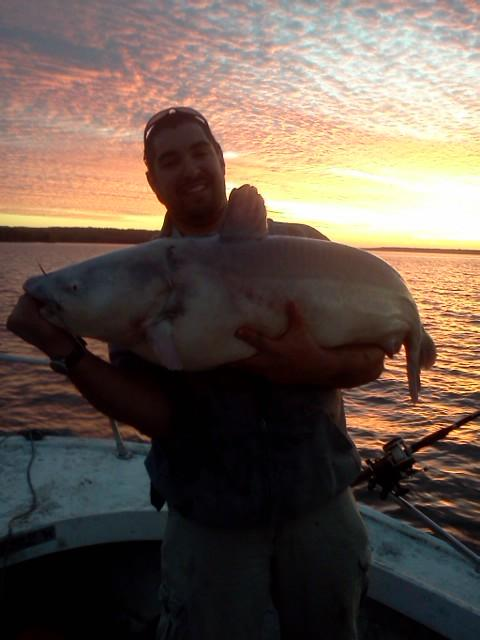 Details about  /BERKLEY TRILENE BIG GAME MONO SEA BEACH FISHING LINE SOLAR GREEN OR RED