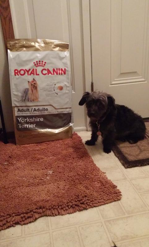 Yorkshire Terrier Adult Dry Dog Food Royal Canin Breed Health