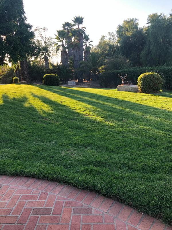 Lawn after using new Ryobi mower