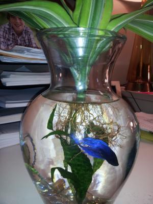 Betta Plant Vase Vase And Cellar Image Avorcor