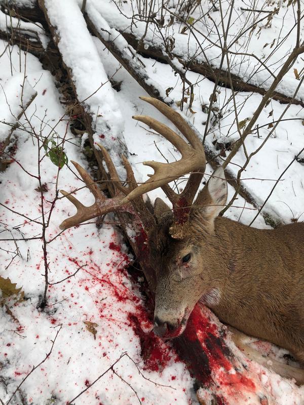Deer Season XP | Winchester Hunting Ammunition | Winchester