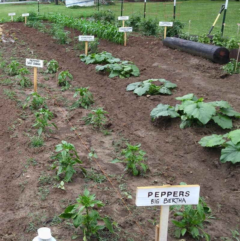 Superbe Garden Begins